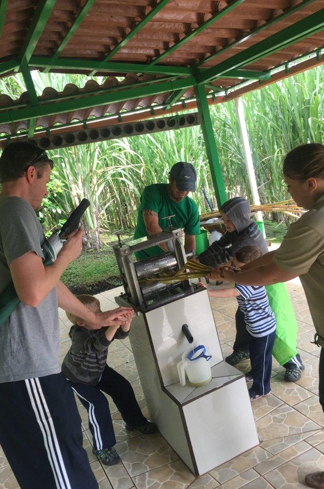 Costa Rica Sugar Cane