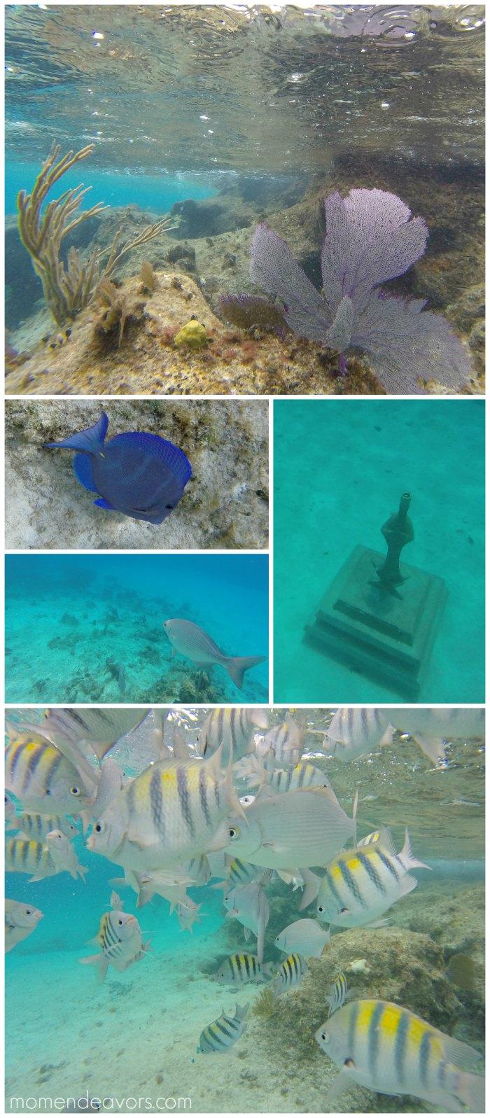 Chankanaab Snorkeling Cozumel