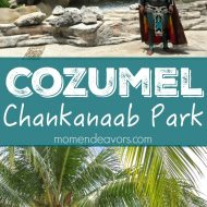 Cozumel Shore Excursion – Snorkeling at Chankanaab