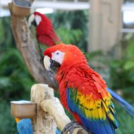 5 Reasons to Visit Miami's Jungle Island