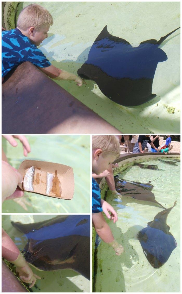 Feeding Rays at SeaWorld
