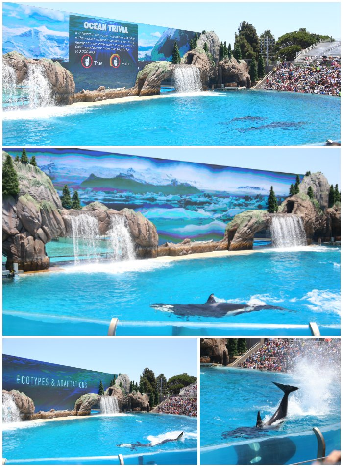 Orca Encounter SeaWorld San Diego