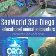 Top 5 Educational Animal Experiences at SeaWorld San Diego